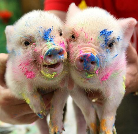 pig_artists